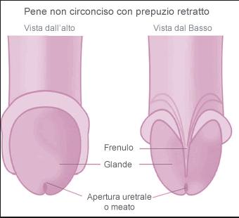 come fare il pene pi� sviluppato