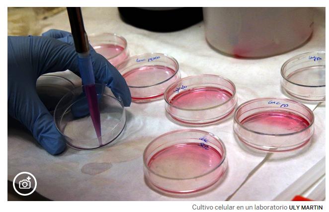 EEUU aprueba su primera terapia génica contra el cáncer 05187a3a6cd37d262185847714edd249