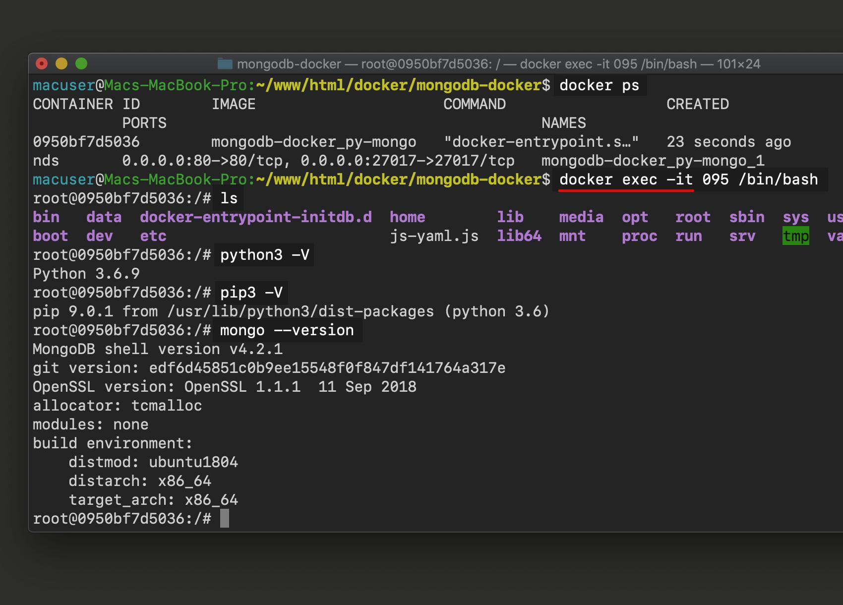 Screenshot of Docker container exec interactive terminal MongoDB Python