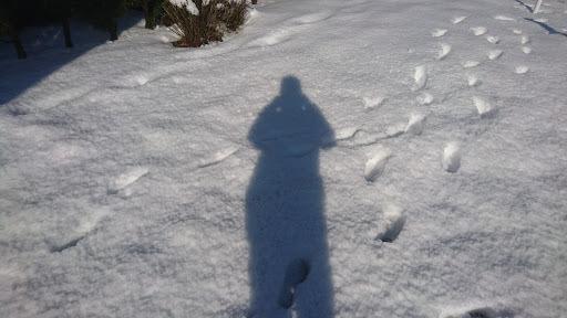 [写真](翌朝)雪に映った自分の影