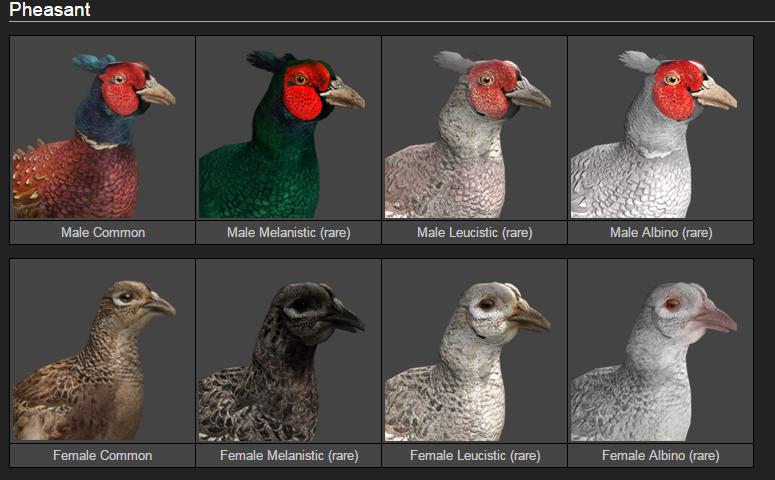21/01/16  nueva especie en Whiterime Ridge, animales para invitados, faisanes raros 3546661c58217898643aae35d37d5999