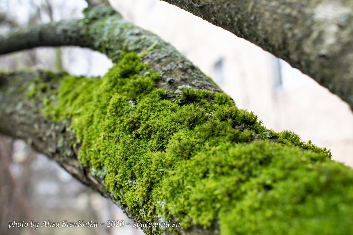 Urban moss