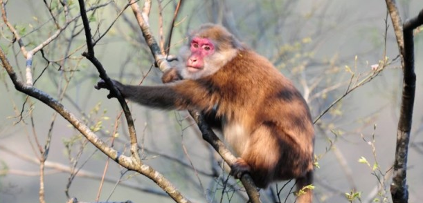 Science & Technology Current Affairs Discovery White Cheeked Macaque