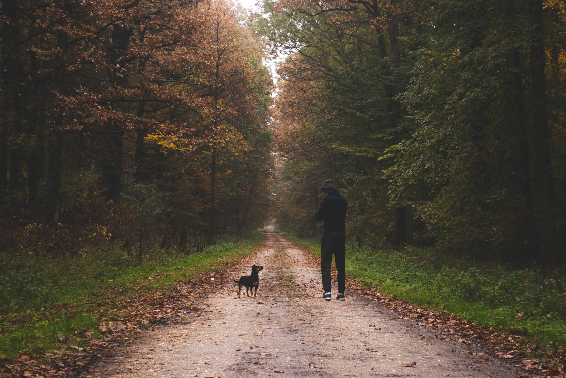 man and dog walking in forest autumn