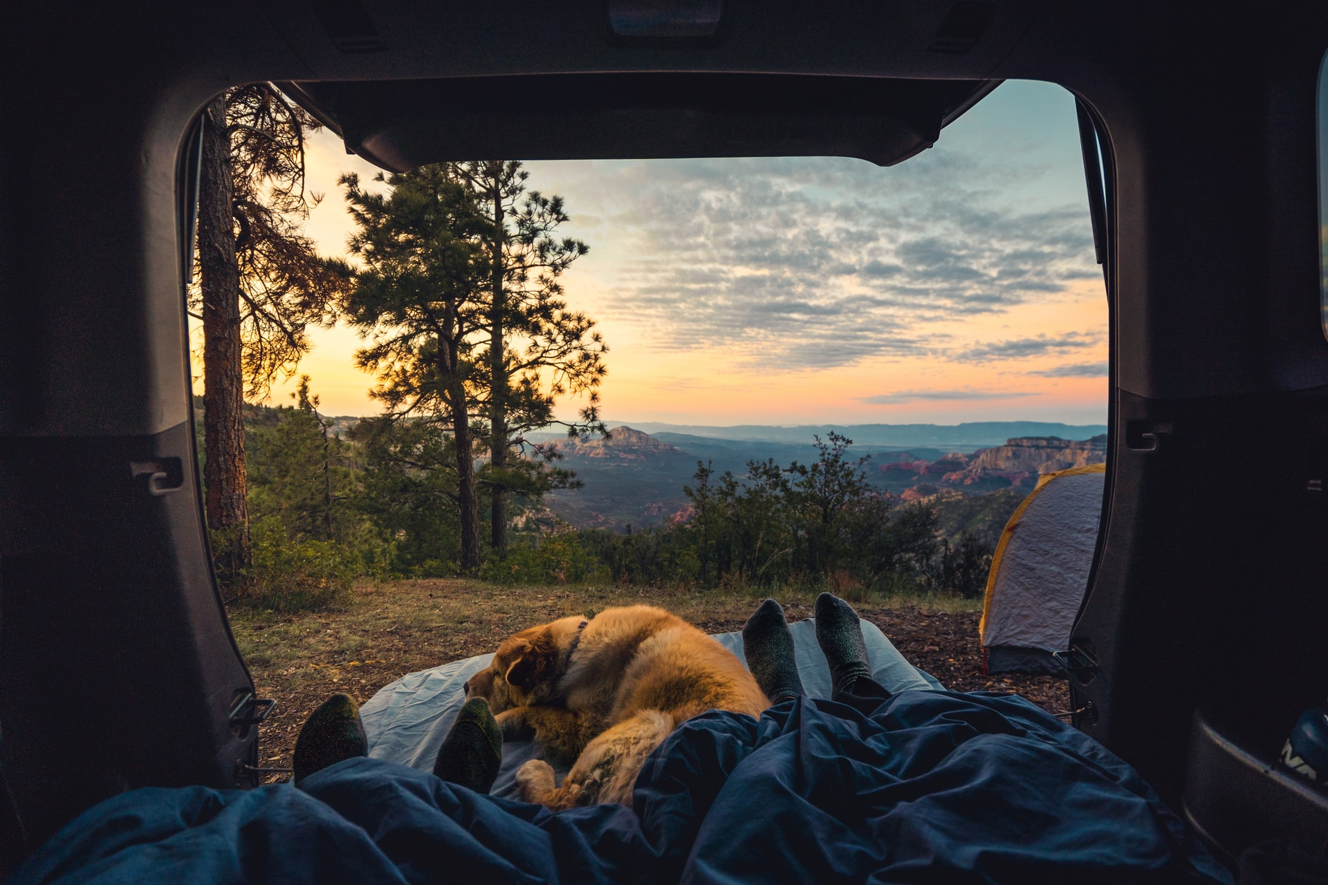 camping outside tent dog