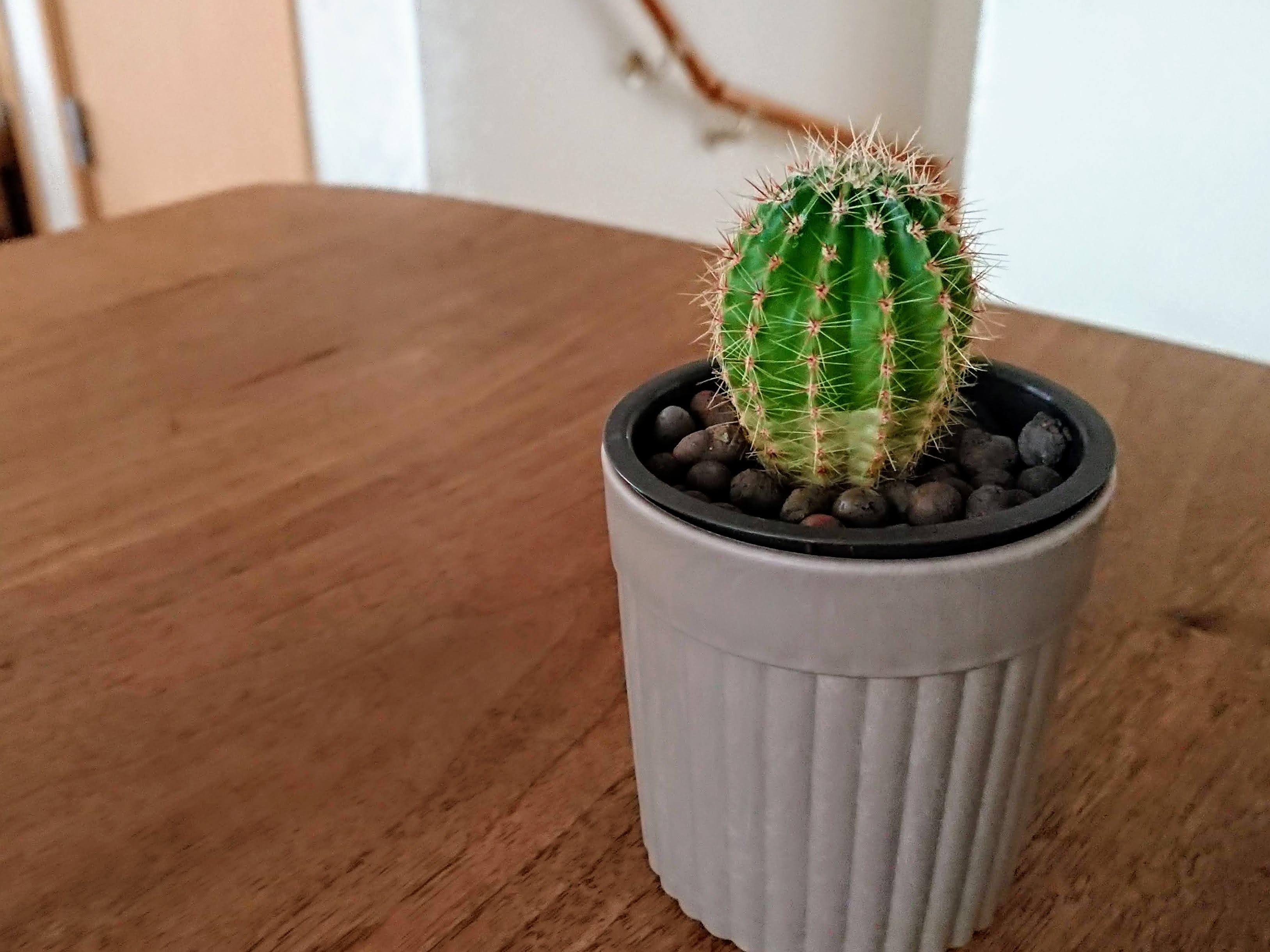 [写真]職場から引き揚げてきたサボテンの鉢