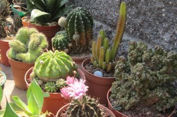 Como tener 2 mil cactus en stock con poco dinero |PFcactus 3