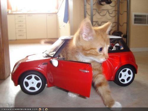 mini cooper cat
