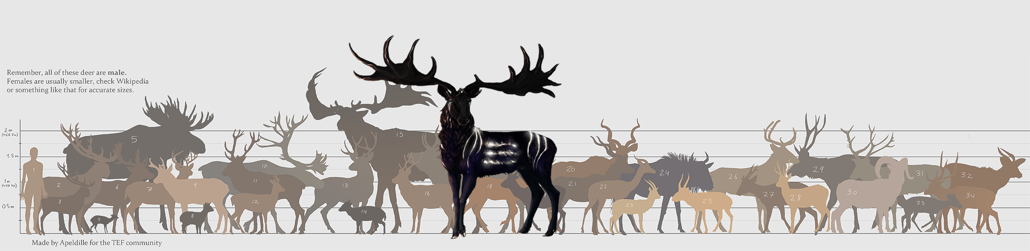 irish-elk-compared-to-moose