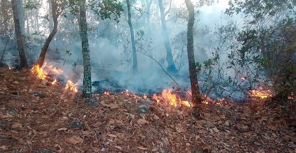 Incendio afecta varias manzanas de bosques en San Nicolás