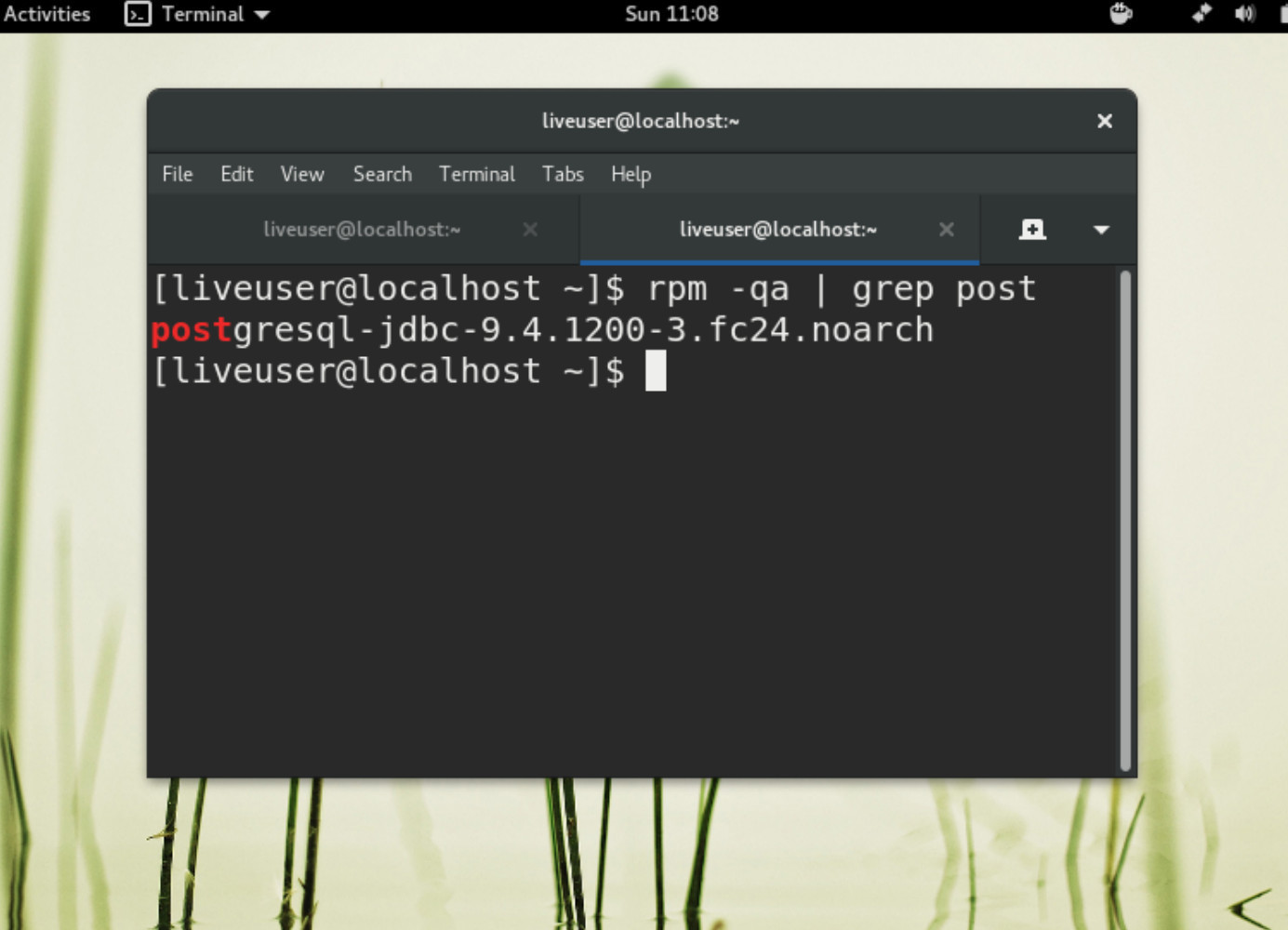 Screenshot of Fedora Linux using grep to look for PostgreSQL packages