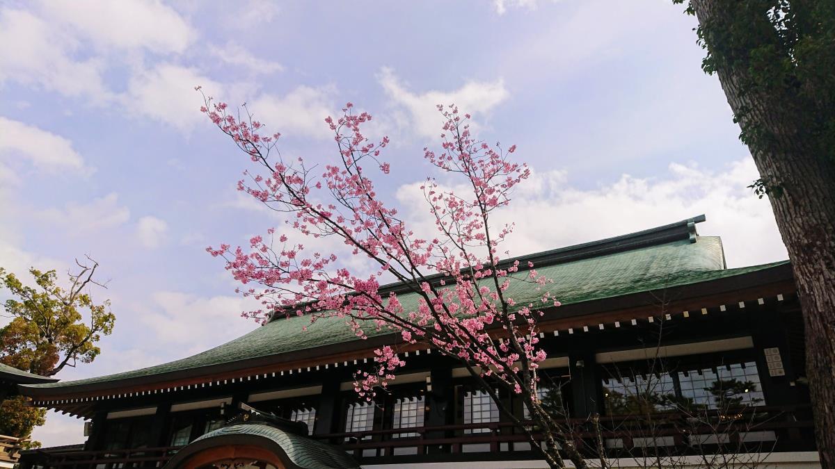 [写真]寒川神社と桜