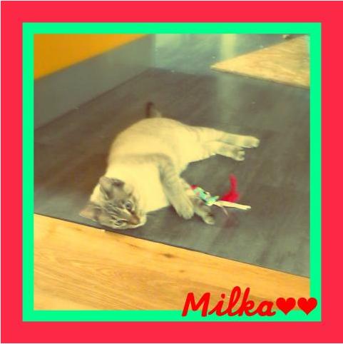 Milka, croisée siamoise née le 1er mars 2016 - Page 2 A12325266834d62241de1ccf276ca5a7