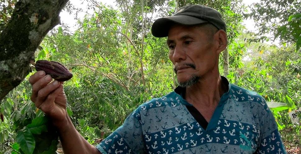 Segoviano transforma el cacao para diversificar producción