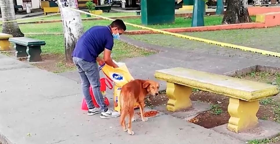 En medio de la pandemia, un nicaragüense alimenta a los animales sin hogar en Panamá
