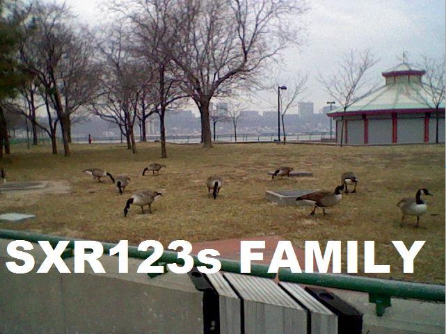 We Found SXRs family B85df95623f14db5084c1c911bc5547c