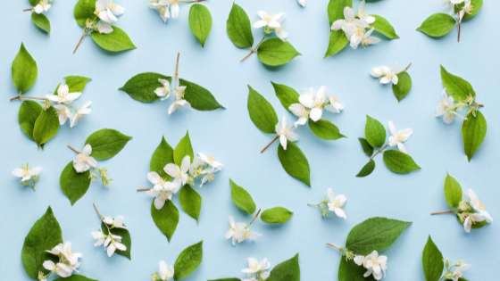 Jasmine essential oils for anxiety and stress relief