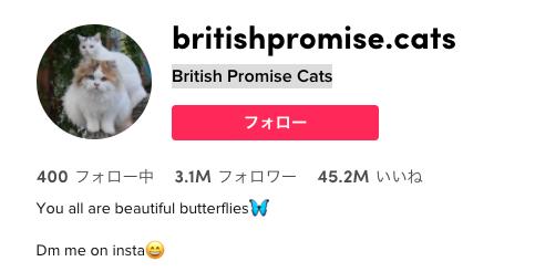 British Promise Cats